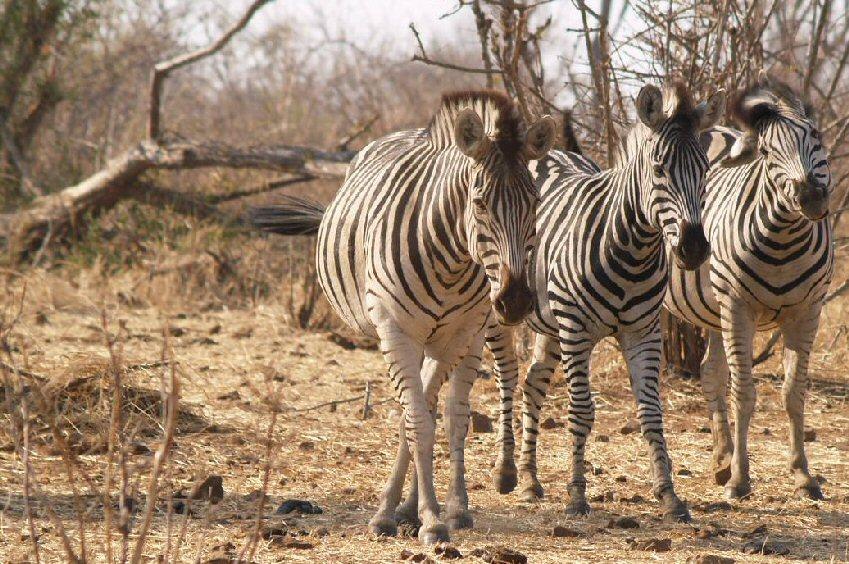 Safari Afrique Nord Botswana