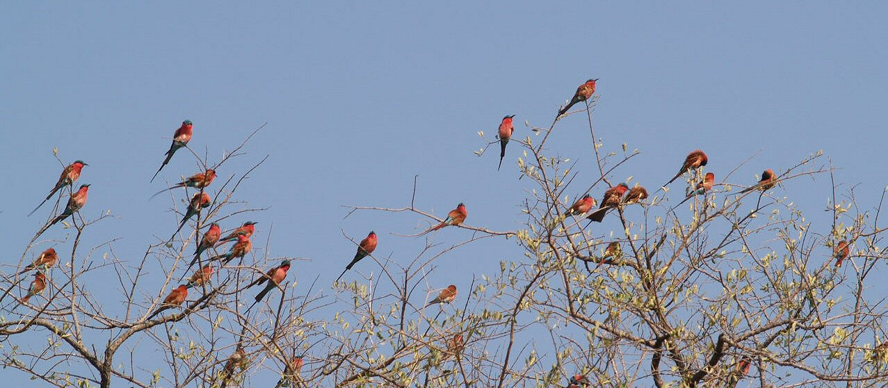 Safari Afrique Botswana
