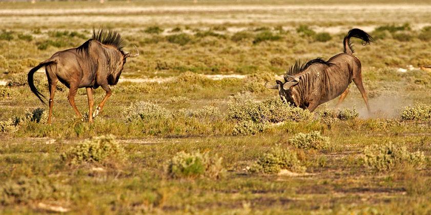 Safari Afrique Namibie