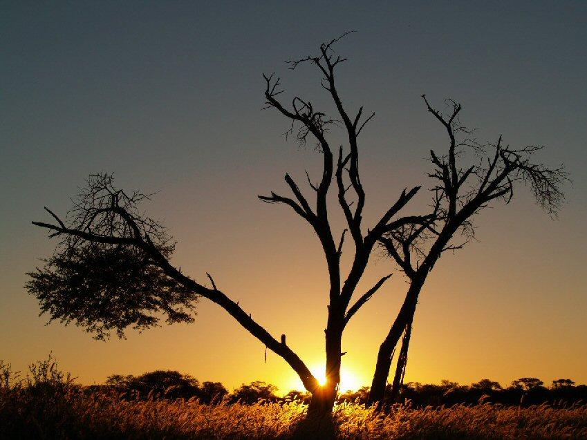 Safari Afrique Kgalagadi