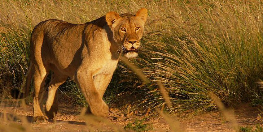 Safari Afrique Sud Botswana