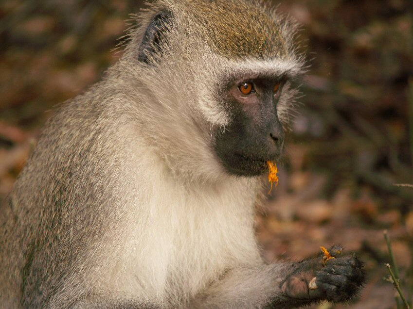 Safari Afrique Malawi