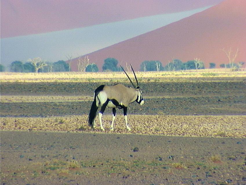 Safari Afrique Safari Namibie
