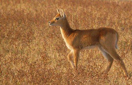 Safari Afrique Zambie