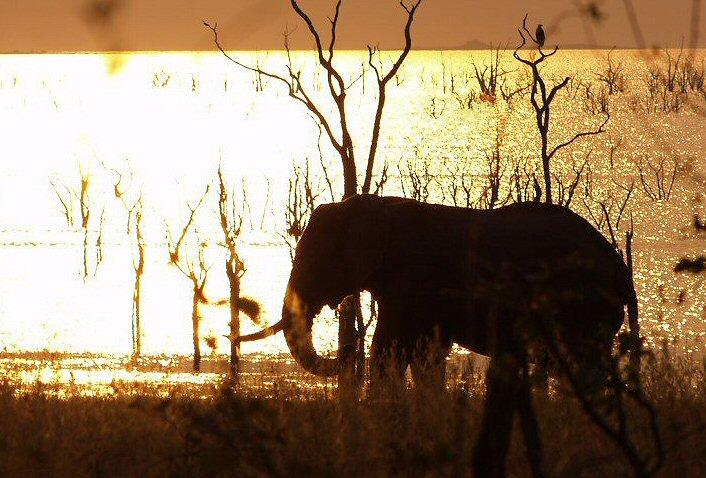 Safari Afrique Zimbabwe